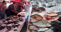 Todays fish prices are slight rise in tilapia prices